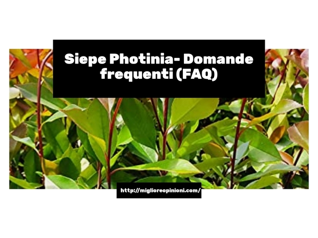 Siepe Photinia- Domande frequenti (FAQ)